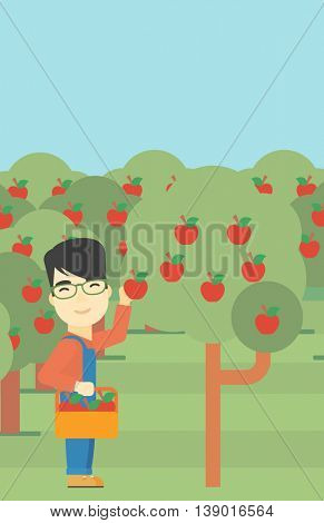 An asian farmer holding a basket and collecting apples in fruit garden. Farmer collecting apples. Vector flat design illustration. Vertical layout.