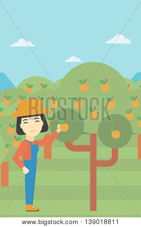 An asian female farmer collecting oranges. Young farmer working in orange garden. Vector flat design illustration. Vertical layout.