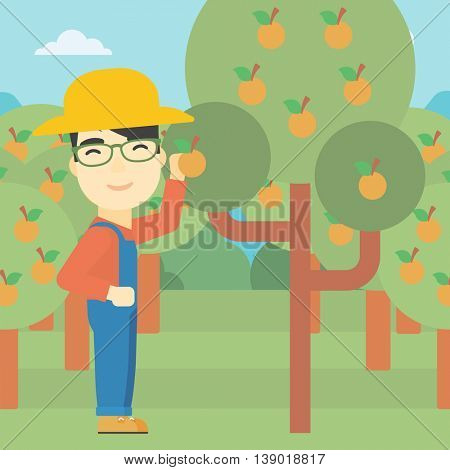 An asian farmer collecting oranges. Young farmer working in orange garden. Vector flat design illustration. Square layout.