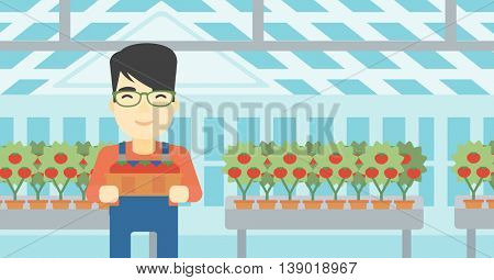 An asian farmer holding a box with tomatoes on the background of greenhouse. Young farmer collecting tomatoes in the greenhouse. Vector flat design illustration. Horizontal layout.