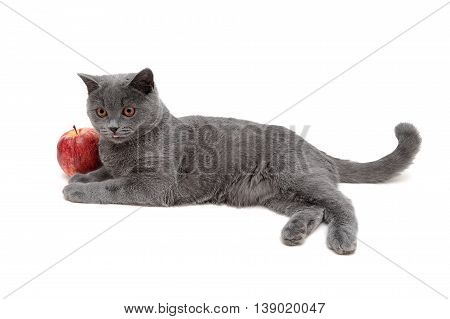 gray cat and red apple isolated on a white background. Horizontal photo.