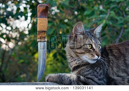cat and a hunting knife vintage toning