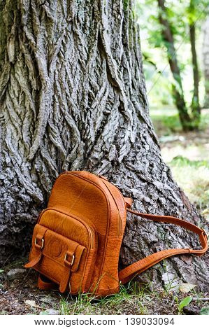 backpack on the background of the huge old tree in the park