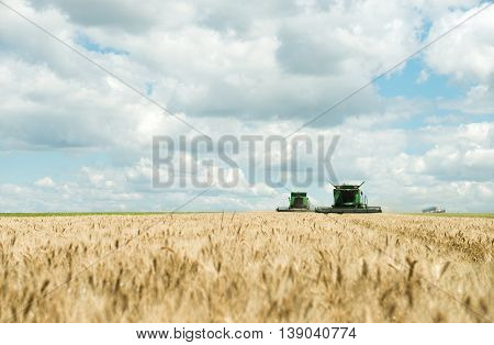 Two modern combine harvester working on a wheat crop