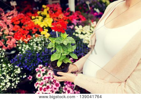 sale, shopping, pregnancy, gardening and people concept - close up of pregnant woman choosing flowers at street market