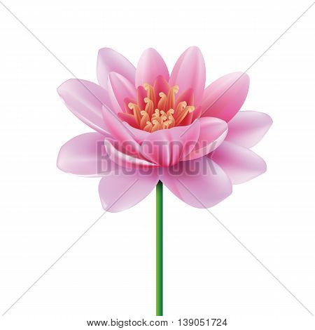 Pink Lotus. Big tropical flower. Isolated water lily. Traditional symbol of harmony. Design element at white background. Vector illustration.