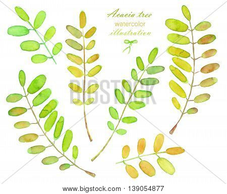 Collection of illustrations of watercolor acacia tree branches, hand drawn isolated on a white background