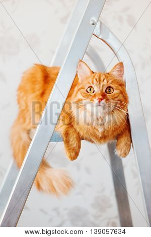 Cute ginger cat sits on ladder. Fluffy pet with curious expression on face. Place for text.
