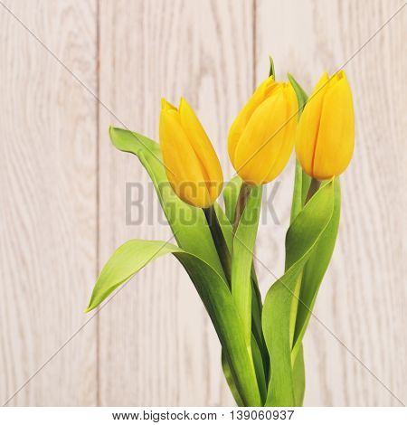 yellow tulip flowers bouquet on wooden background