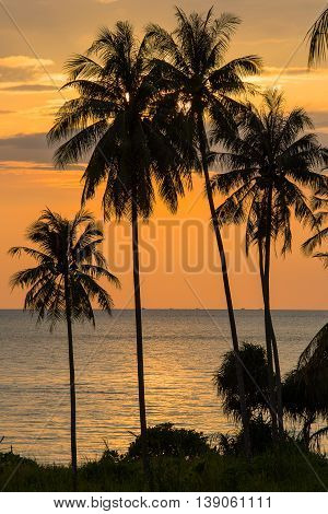 Coconut palm trees silhouette and sea water on sunset in tropical beach