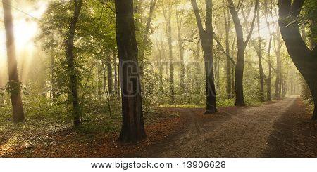 Sunlight breaking through a floodplain forest