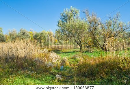 Seasonal landscape in central Ukraine near Dnepropetrovsk city