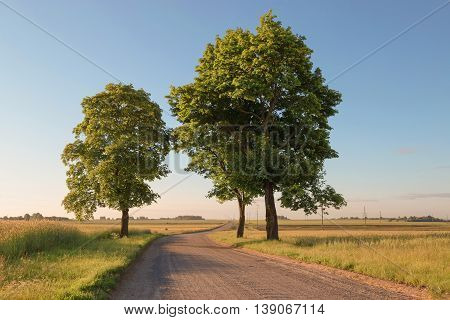 Countryside Road In Green Field On Background Of Morning Sky
