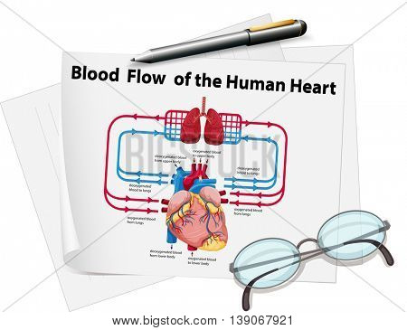 Blood flow of human heart on paper illustration