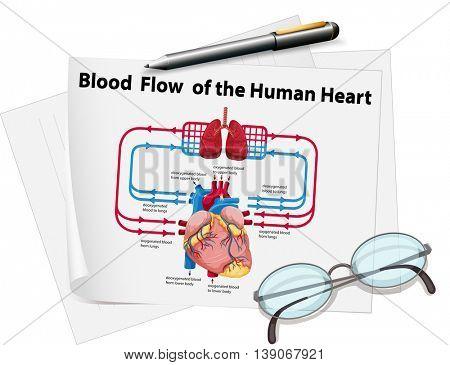 Blood flow of human heart on paper illustration