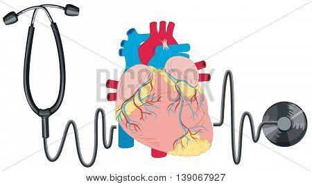 Stethoscope and human heart illustration