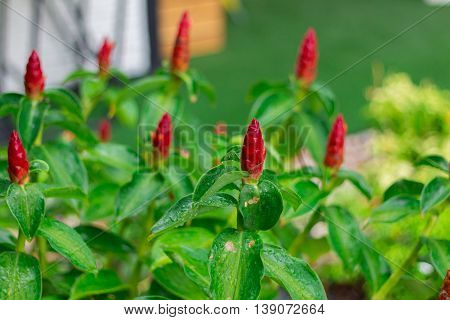 Group of red flowers in the garden
