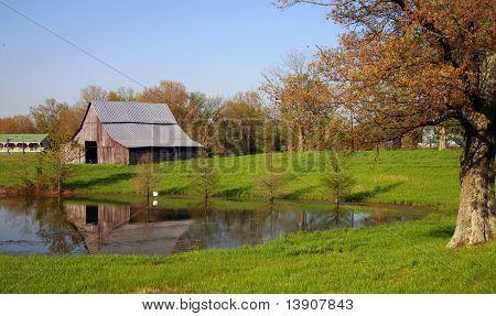 Granja de Kentucky