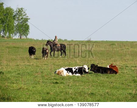 Home animals play greater role in lifes of the person