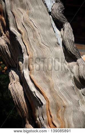 An ancient cypress tree and the unique wood grain creating an abstract image within the Confucius Temple in the city of Qufu in Shandong Province China.