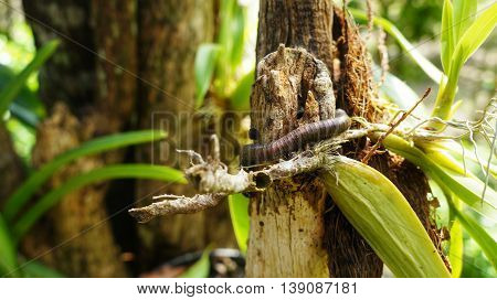 caterpillar creeping on plant in natural surrounding