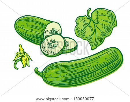 Fresh green cucumbers - whole, half, slices, leaf and flower. Isolated on the white background. Vector black hand drawn vintage engraving illustration for poster, label, menu, web.
