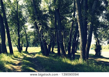 In summer forest, landscape with trees under sunlight