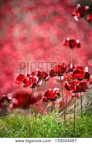 Field of memorial poppies at the Black Watch Museum in Perth Scotland