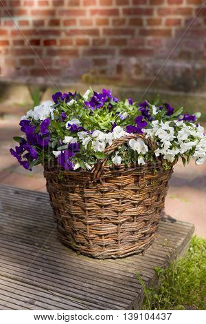 Beautiful summer flowers in the round basket. Flowers basket on the street and with a brick wall as a background. Flower market.