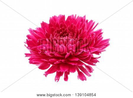 color, decoration flowers chrysanthemum on white background