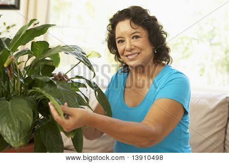 Senior Woman At Home Looking After Houseplant