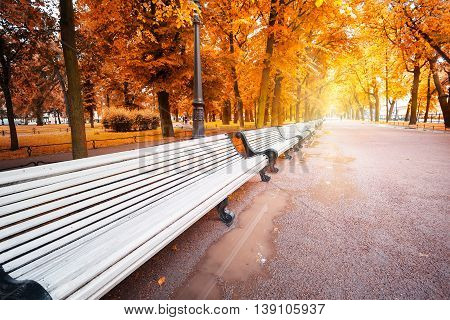 Path with benches in the park in autumn