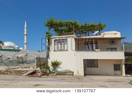 A house with a plant on the roof against the background of a mosque,