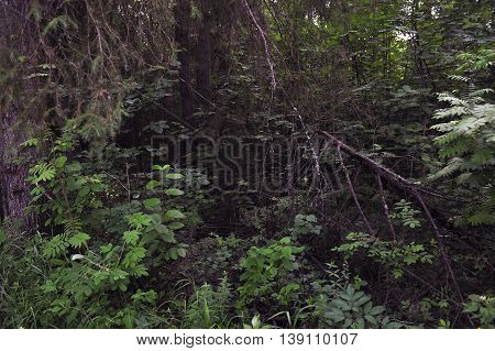 Landscape view of the deep in forest