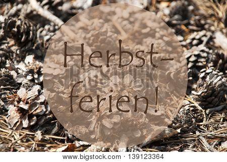 Texture Of Fir Or Pine Cone. Autumn Season Greeting Card. German Text Herbstferien Means Fall Break
