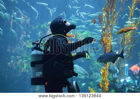 July 20, 2016 in Los Angeles, CA:  Scuba diver feeding the fish taken at in an aquarium at the California Science Center where visitors can watch exotic saltwater fish beside a Kelp Plant Forest