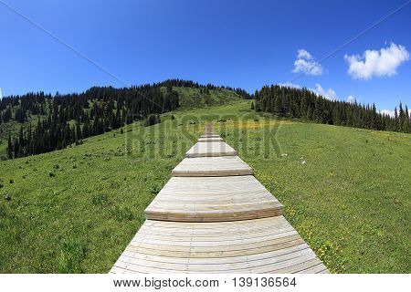 beautiful wooden boardwalk staircase hiking trail lead to forest