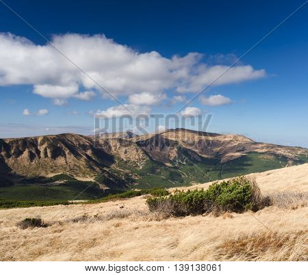 Sunny autumn landscape in the mountains. Dry grass on the slope. Blue sky with cumulus clouds. Carpathians, Ukraine, Europe