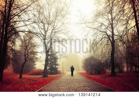 Autumn Foggy Alley - Mysterious Autumn Landscape