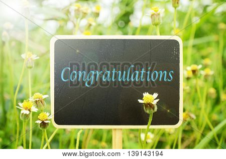Wooden board signs on Mexican daisy flowers background with warm light tone. Congratulations.