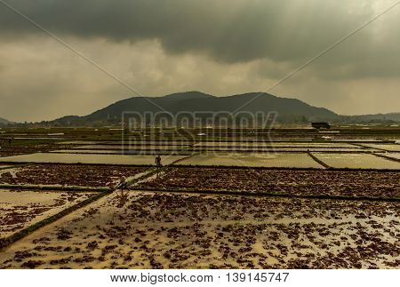 A farmer works in a muddy field on a stormy day in the Vietnamese countryside
