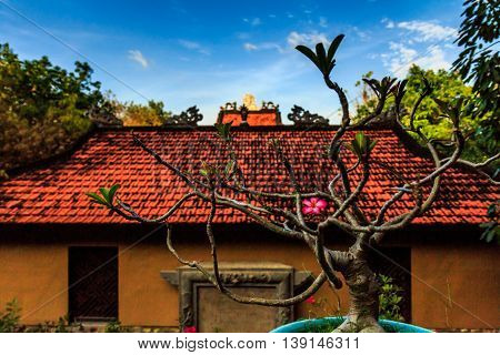 A gnarled tree and a blurred temple with a red roof in Vietnam