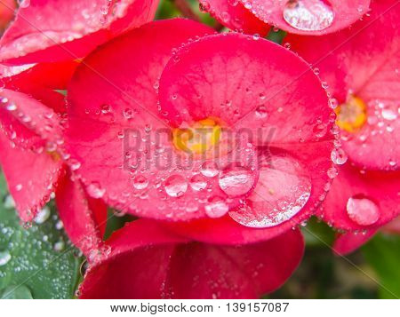 close up Dew drops on spring flower. spring background