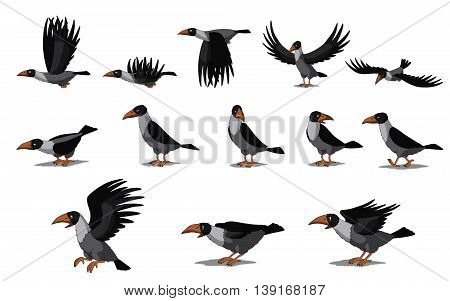 Set of Crow and Raven images. Digital painting full color cartoon style illustration isolated on white background.
