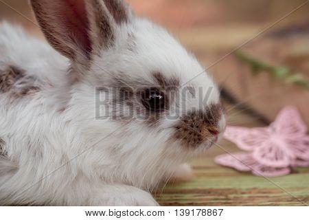 Cute Little Bunny Rabbit