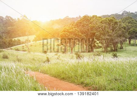 Green hills with flowering grass and tree inside national park of Thailand. Background is warm yellow light from sunrise.