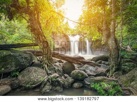 Moving mud waterfall surrounded by green tree and big stone. Orange sunlight shining through foliage and leaves on top.