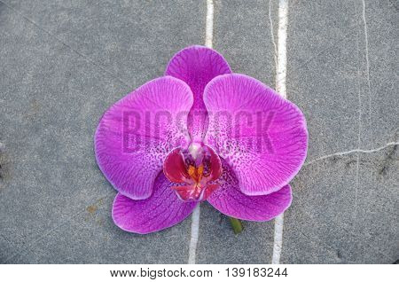 Pink orchid on gray texture