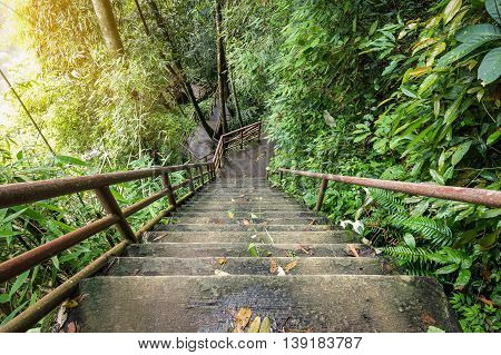 High and steep cement stairs with iron pipe wall getting down into green rainy forest of national park in Thailand.