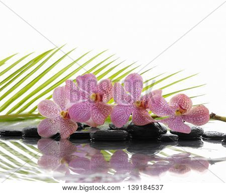 pink orchid and wet black stones with green leaf